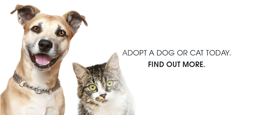 Joliet Township Animal Control – Finding Pets a Home